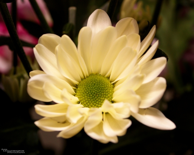 flower080316