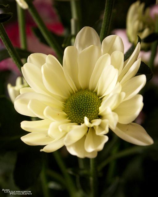 flower0803162