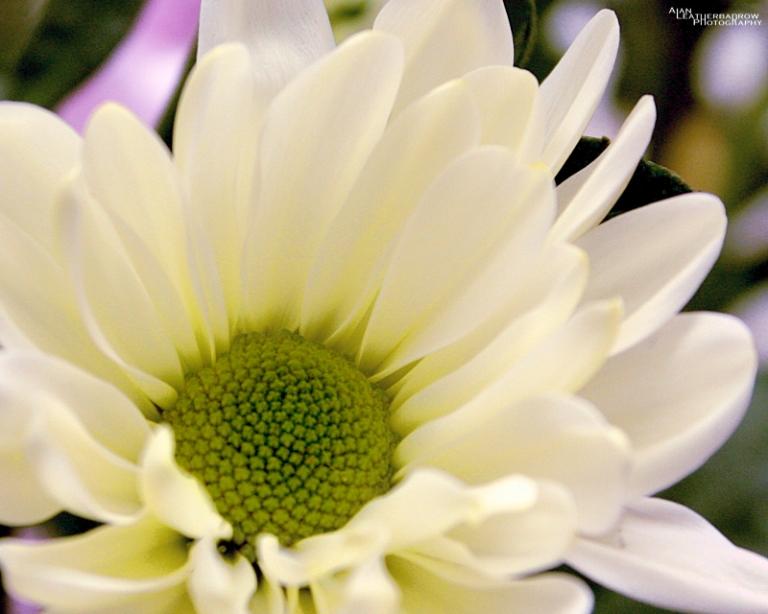 flower0803163