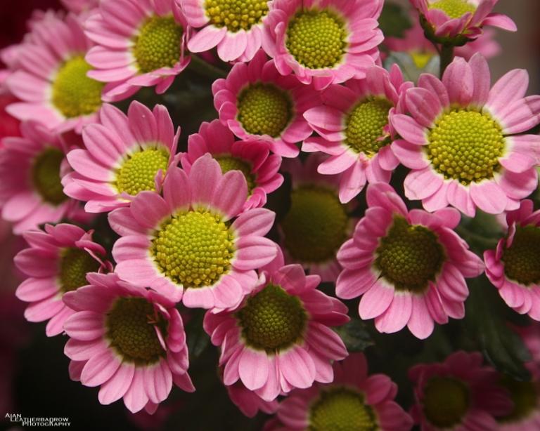 flower090316