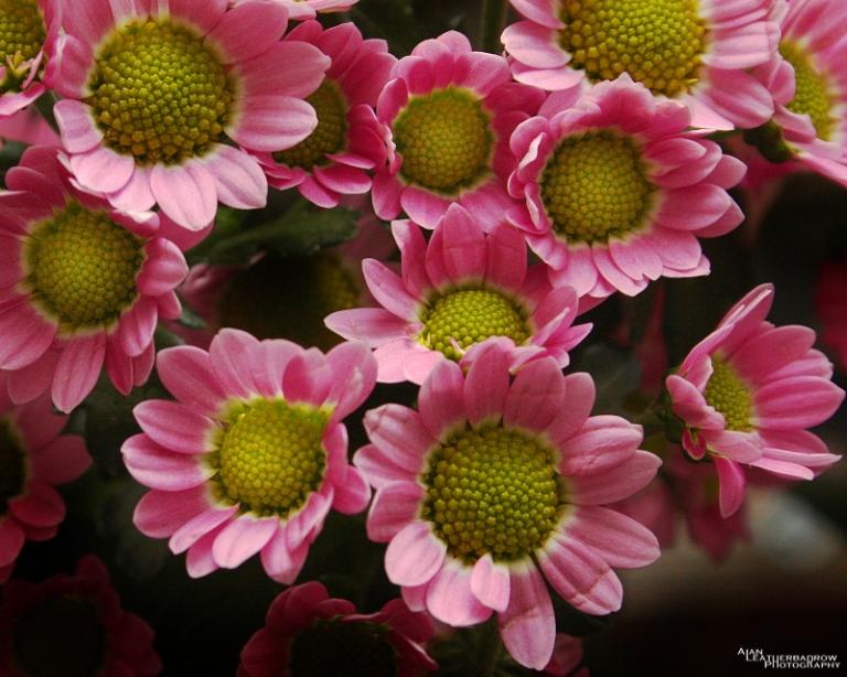 flower0903162