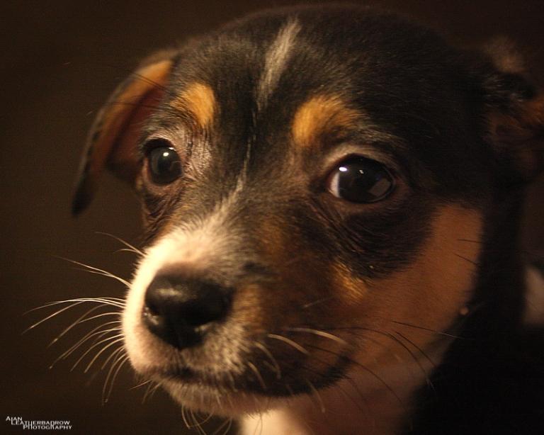 puppy160416