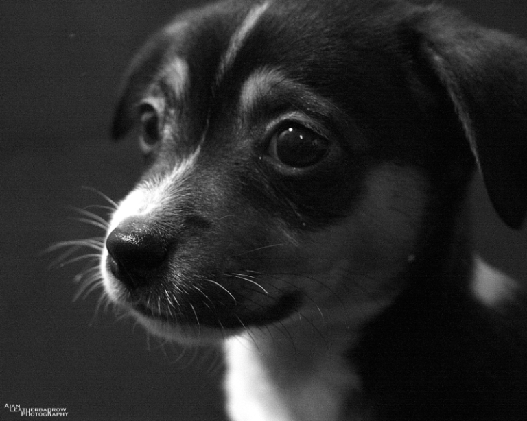 puppy1604162