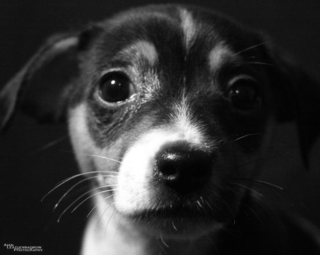 puppy1604163