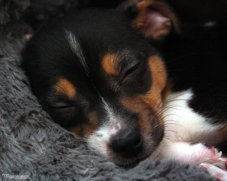 puppy190416