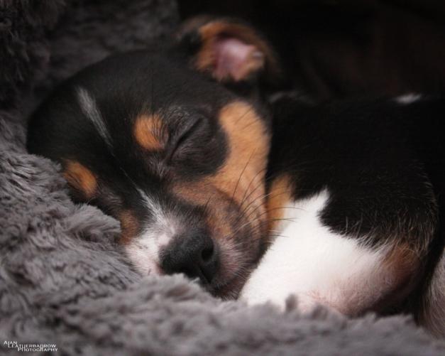 puppy1904162