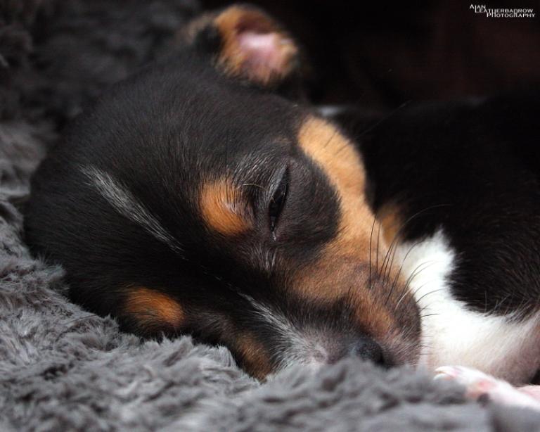 puppy1904163