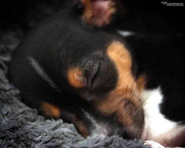 puppy1904164