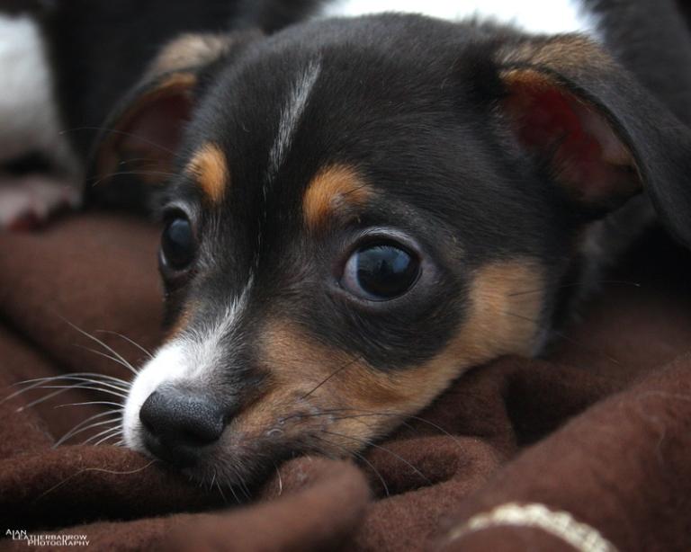 puppy200416