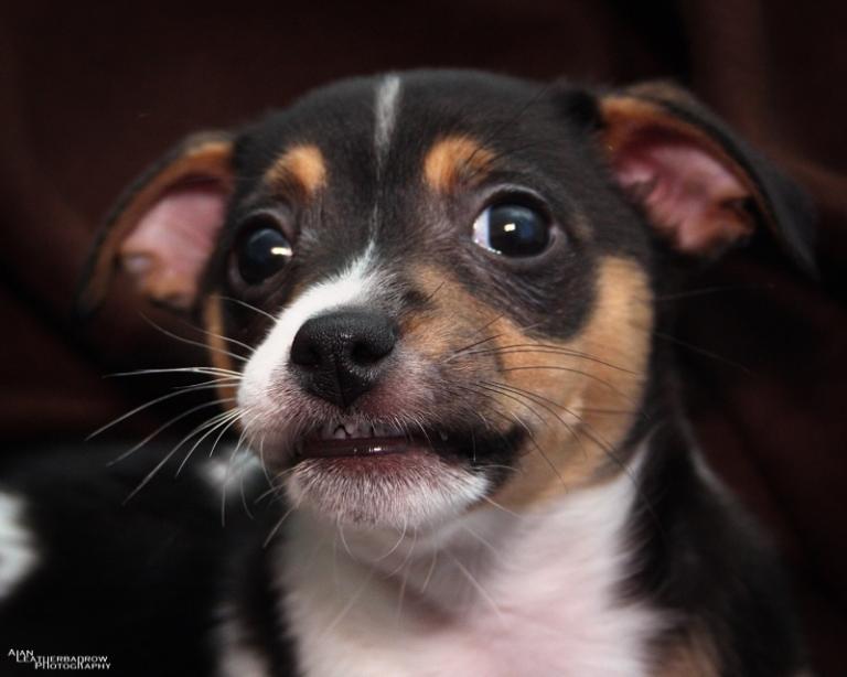 puppy2004162