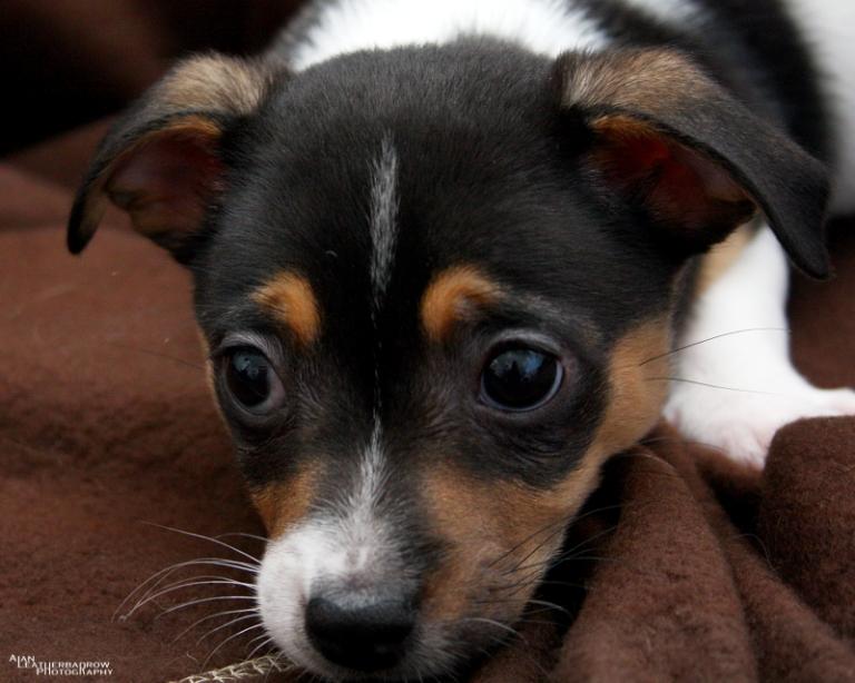 puppy2004163