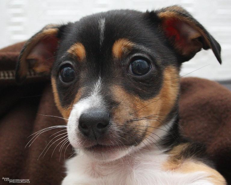 puppy290401