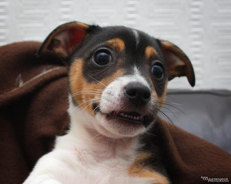 puppy290402