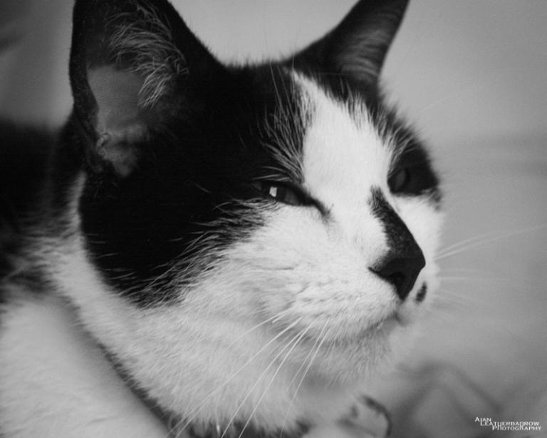 cat010401