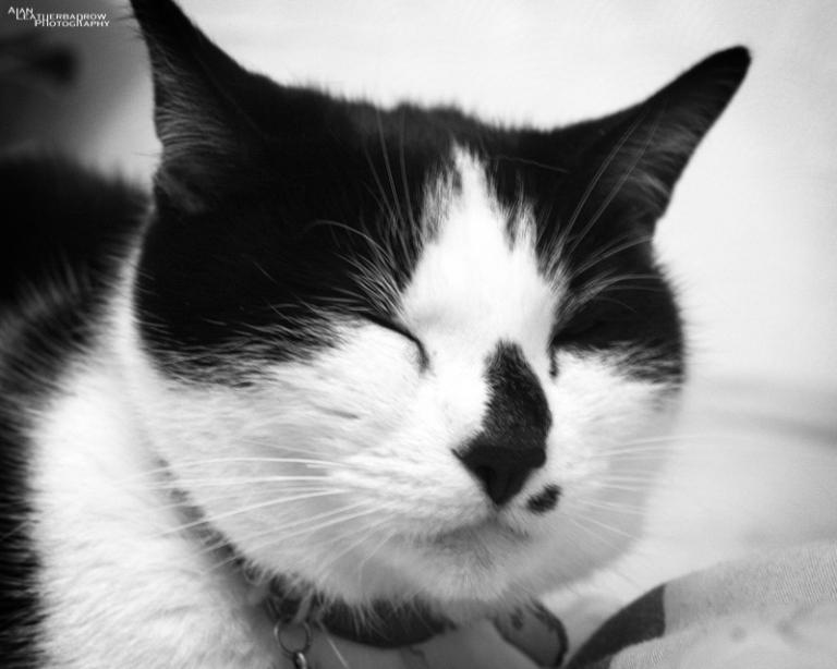 cat010404