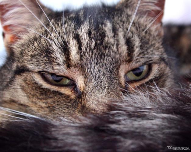 cat110516