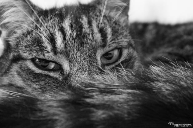 cat1105162