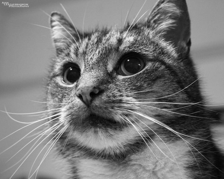 cat2005161