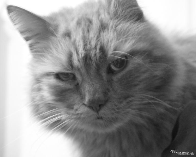 moodycat200516