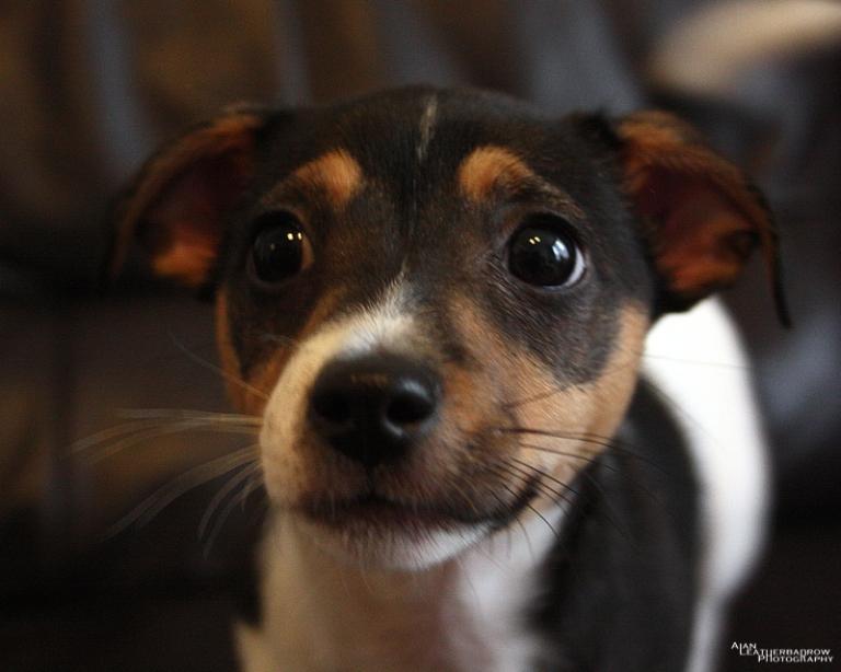 puppy1205162