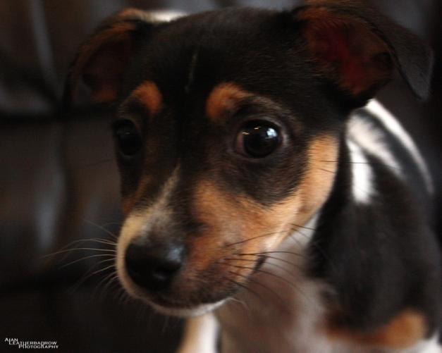 puppy1205163