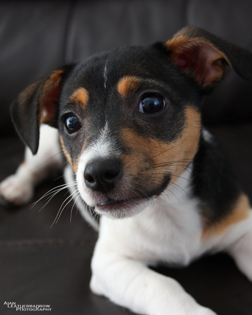 puppy2205161