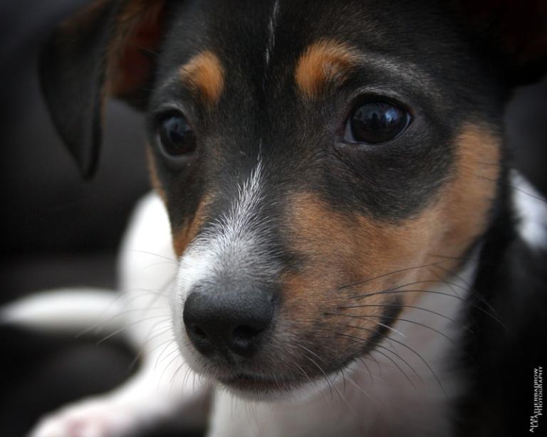 puppy2205162