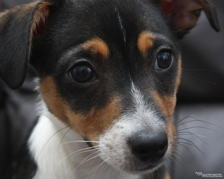 puppy2205164