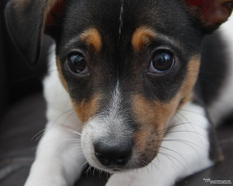 puppy2205165