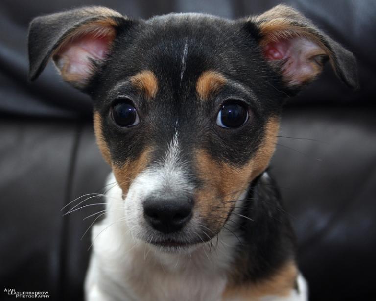 puppy2205169