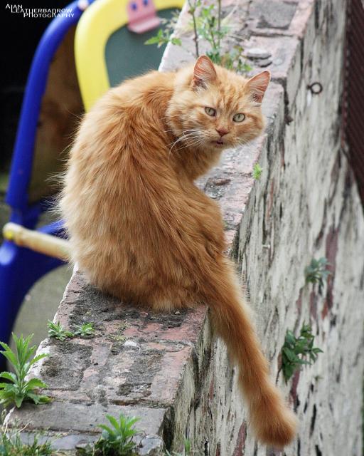 cat0406161