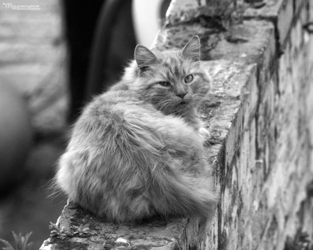 cat0406162