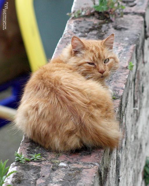 cat0406163