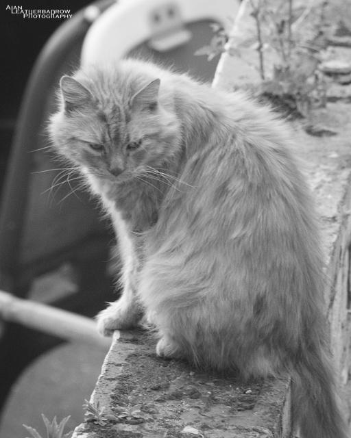 cat0406164