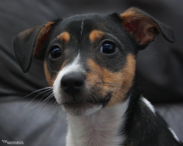 puppy22051611