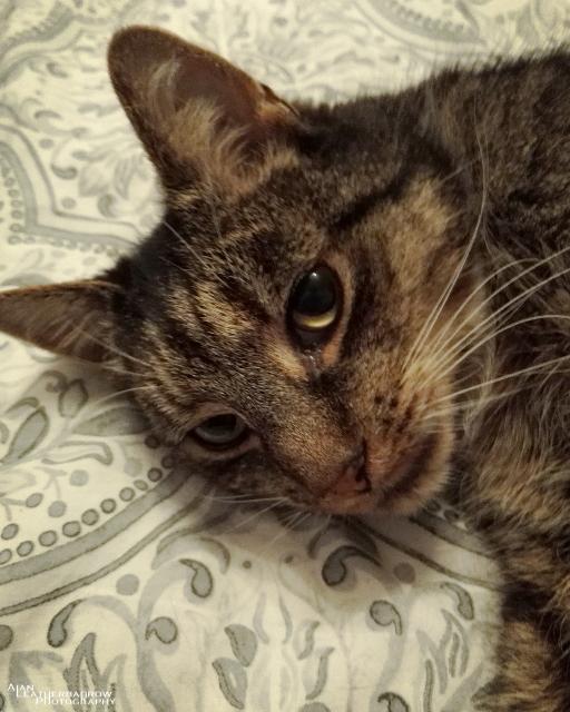 cat1207161.jpg