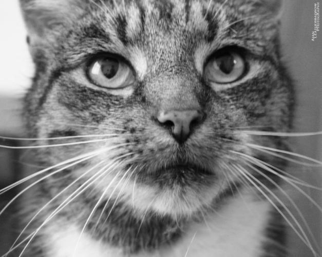 cat1507163