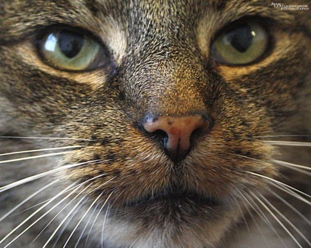 cat1507164
