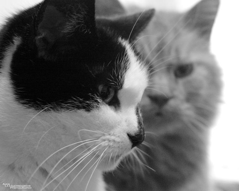 cats1507161