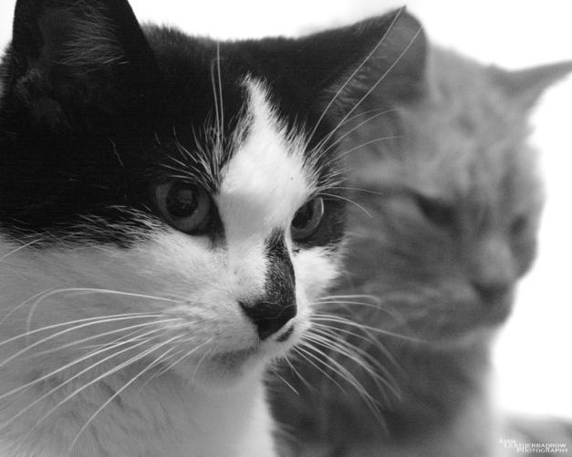 cats1507162