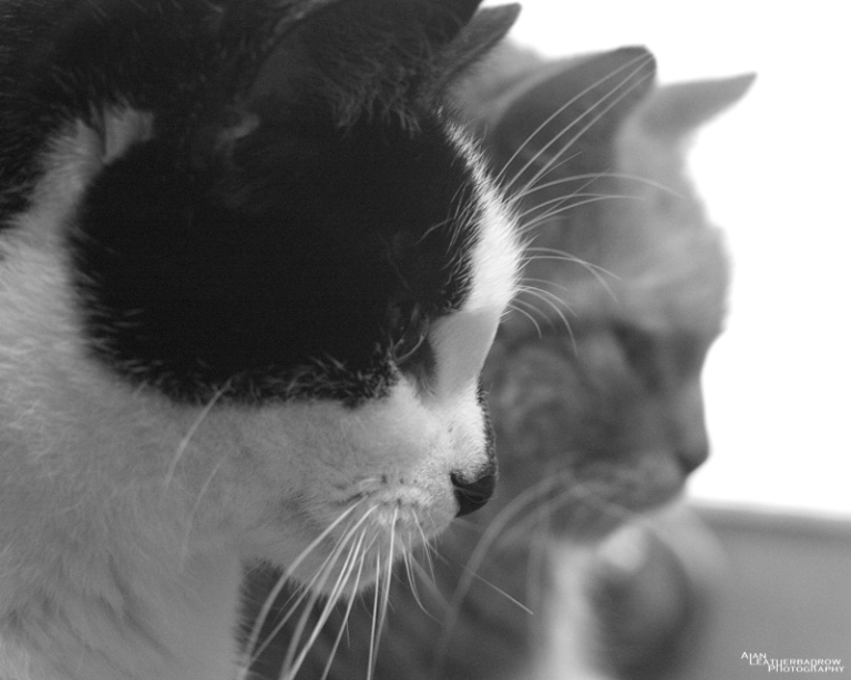 cats1507165