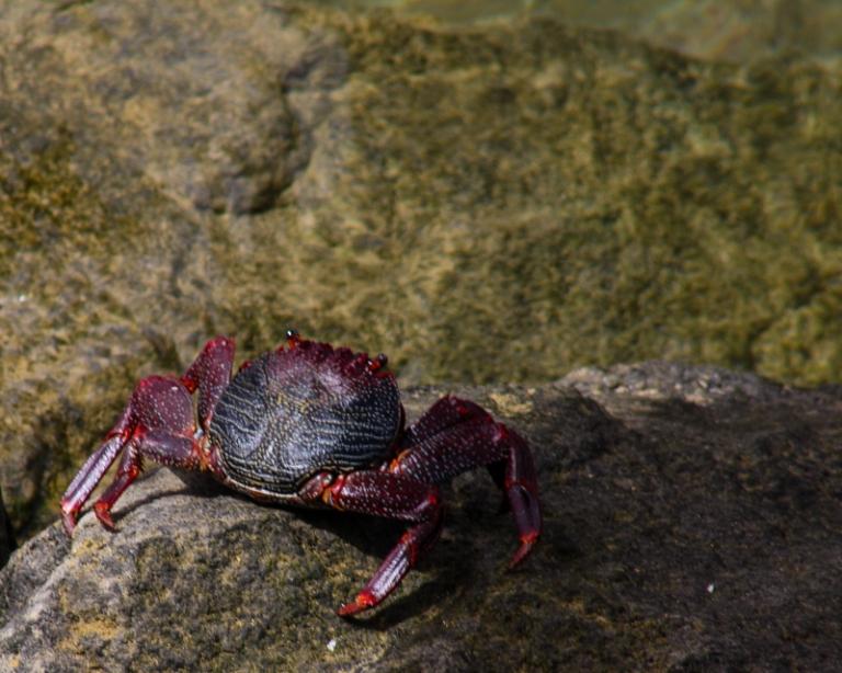 crab-7619