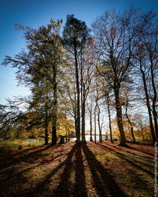 silhouettetree29-10-16-1