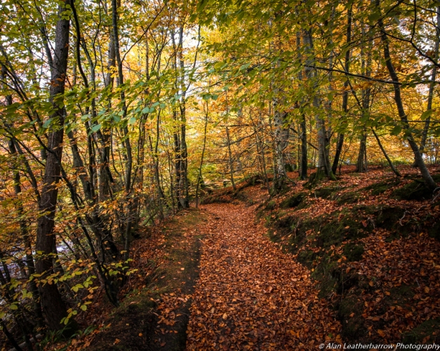 forestpath-8494