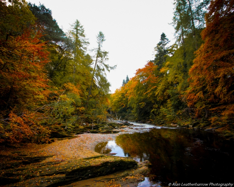 foreststream-8498