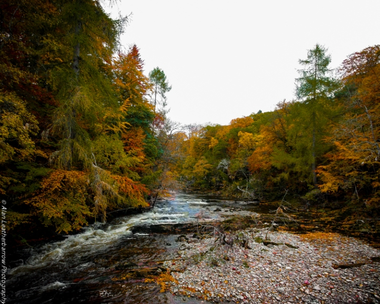 foreststream-8505