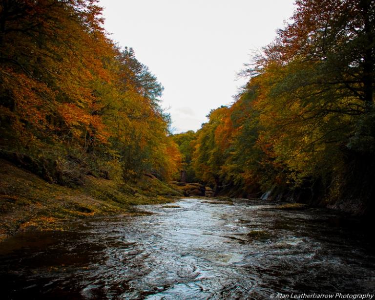 foreststream-8579