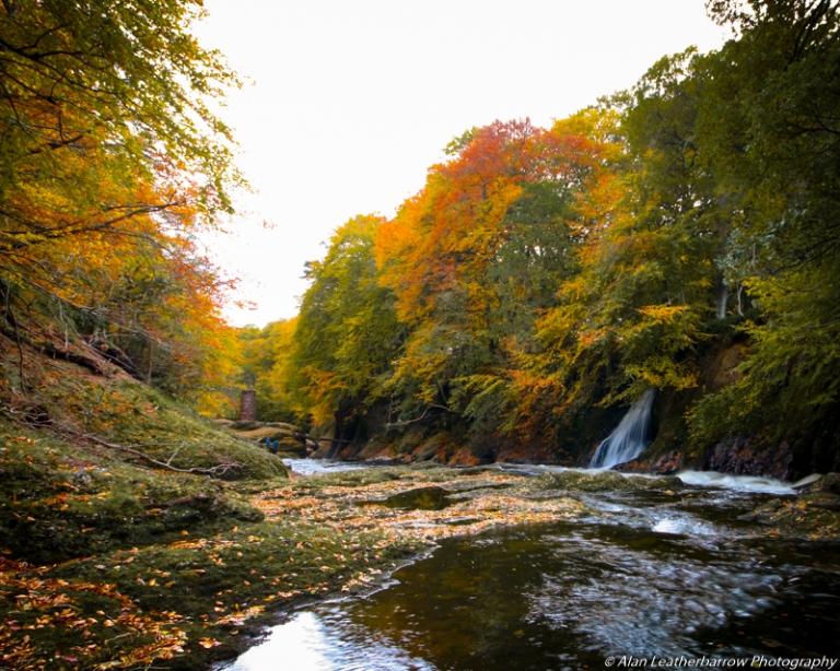 foreststream-8597