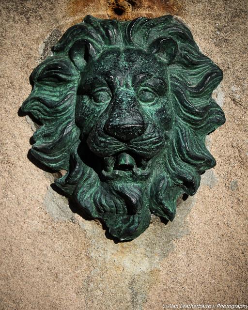 lion-8191