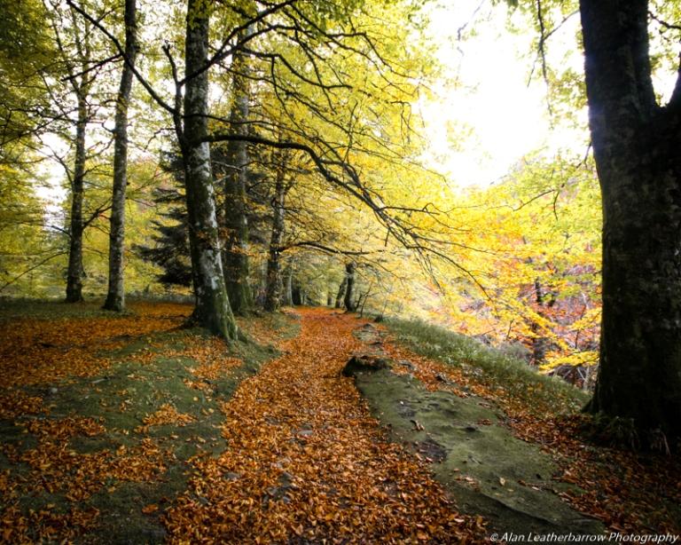 forestpath-8609